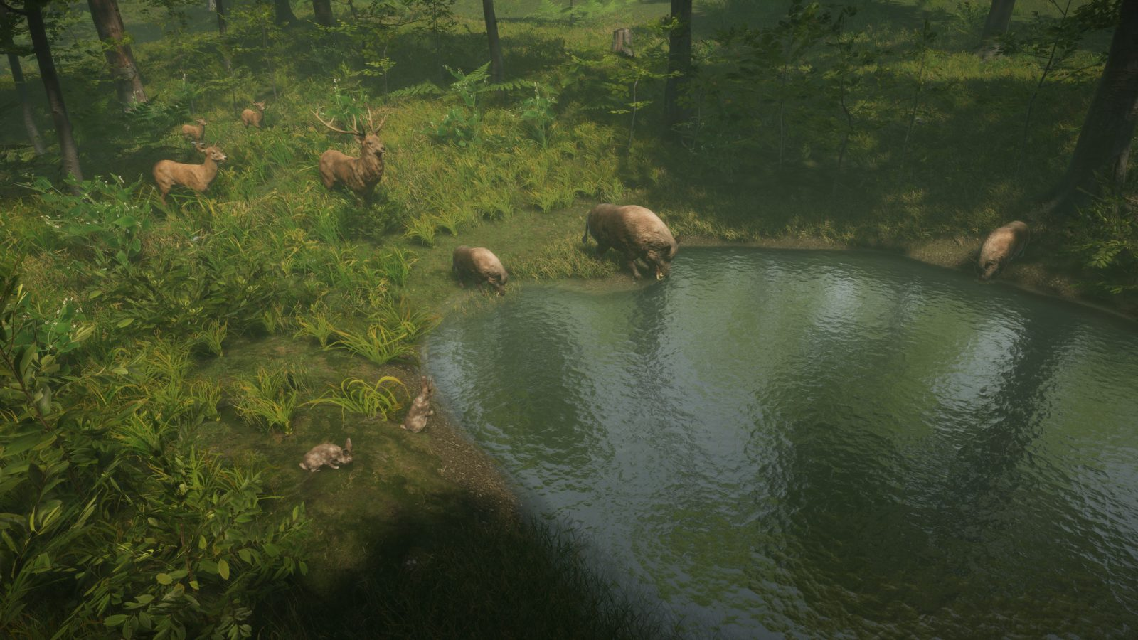 Animal Instincts Watch Online animal survival sim natural instincts announced for pc